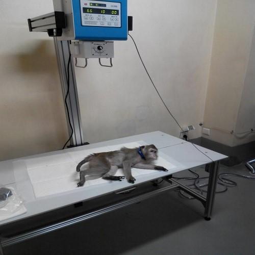 动物X射线机