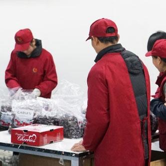 牛油果批发厂家现货供应,各种优惠就选悠汇园猕猴桃批发