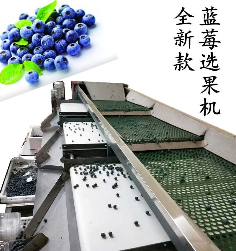 蓝莓分选机按大小分选