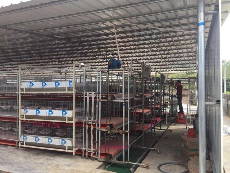 大棚养殖自动清粪机  养鸽场用清粪机  清粪机 送料机